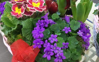 Hrnkové květiny
