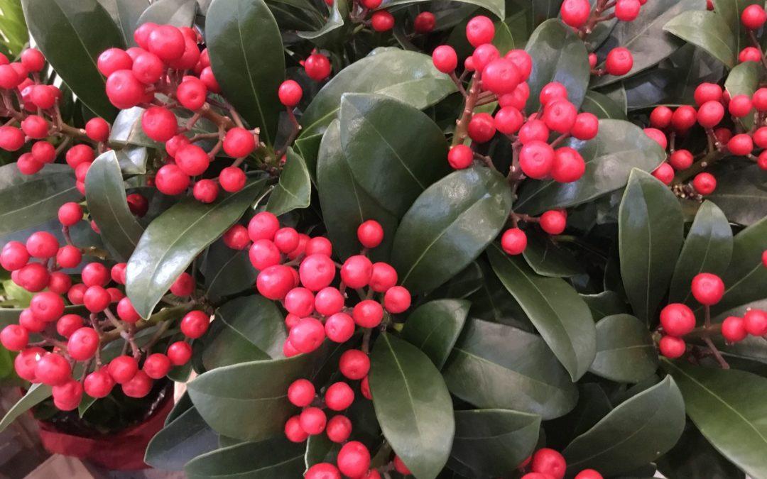 Vánoční Břeclav